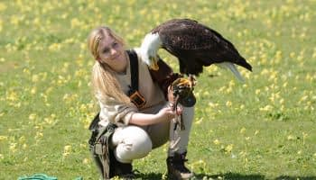 Hawk Conservancy Andover